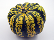 Carnival Squash | Willy Street Co-op's Winter Squash 101