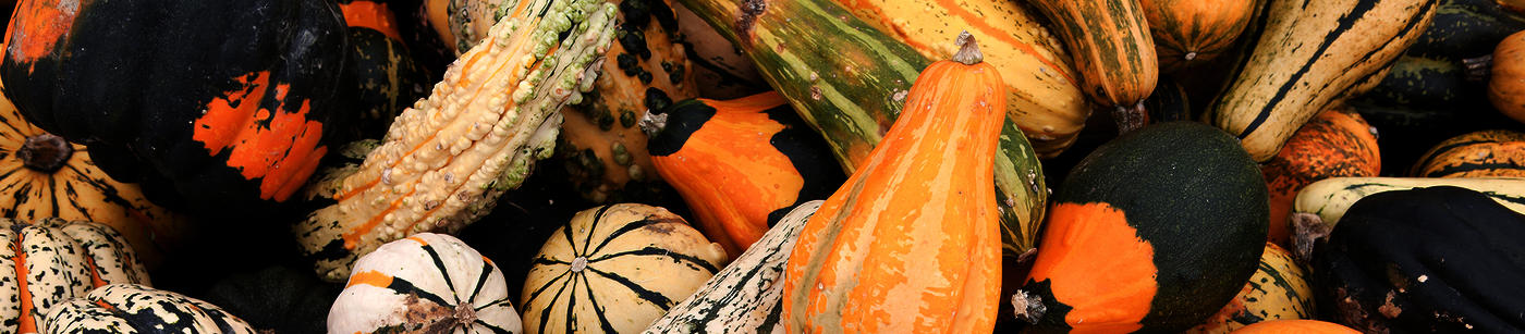 Willy Street Co-op's Winter Squash 101